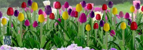 95554 HO Tulips / Tulpen (16)