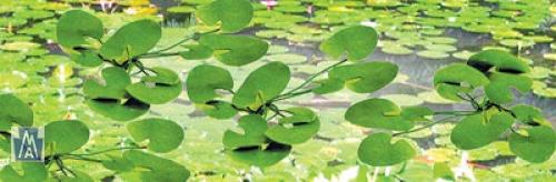 95537 HO Lily Pads, Wasserlilien