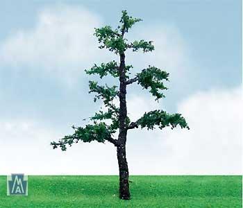 92213 N Old Pine / Kiefer (3)