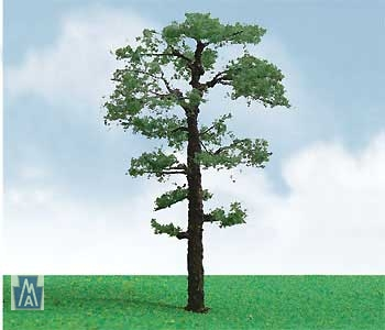 92212 Scots Pine / Kiefer (3)
