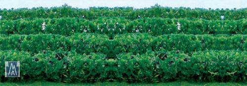 95515 HO Green Hedges, grüne Hecke