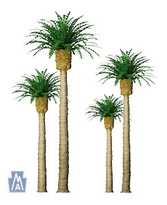 94353 N Phoenix Palm (4)