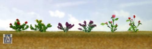 95558 O Assorted Flower Plants 1, Sortiment blühender Pflanzen 1