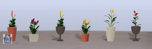 95572 O Assorted Potted Flower Plants 4, Sortiment blühende Topfpflanzen 4