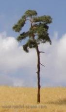 BR100 Pine-tree, Kiefer, 80-110mm (3x)