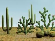 95613 HO Cacti, Kakteen