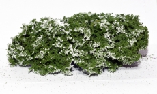 701-915 blühende Büsche, Flowering Shrubs, weiß, white