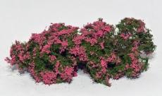 701-935 blühende Büsche, Flowering Bushes, pink