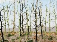 95629 HO Bare Tree, Woods Edge Trees, Bausatz (14)