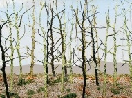 95630, O Scale, Bare Tree, Woods Edge Trees, (8)