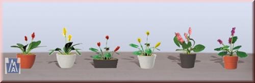 95570 Spur O Assorted Potted Flower Plants 3 Sortime