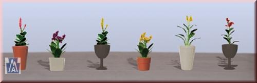 95572 Spur O Assorted Potted Flower Plants 4 Sortim