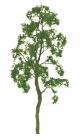 94416 N Birch Tree