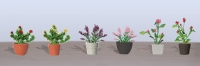 95565 HO (6) Assorted Potted Flower Plants 1