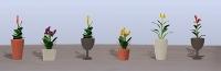 95571 HO (6) Assorted Potted Flower Plants 4, Blumen im Topf