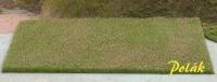 5812 Luzernenfeld - blühend