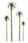 94235 Z Palm (6)