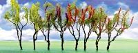 95632 O Flower Tree, blühende Bäume
