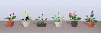 95570 O Assorted Potted Flower Plants 3, Sortiment blühende Topfpflanzen 3