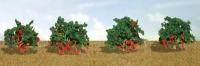 95577 O Strawberry Plants, Erdbeere
