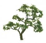 96060 Beech Tree