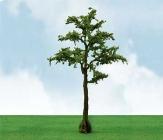 92316 HO Cypress, Zypresse (2)