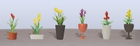 95568 O Assorted Potted Flower Plants 2, Sortiment blühender Topfpflanzen 2