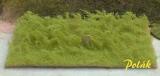 5941 Polak Hochgras – hellgrün