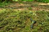 F601 Walduntergrund Frühling