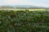F620 Walduntergrund Blaubeere
