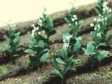 95586 HO Tobacco Plant, Tabakpflanze