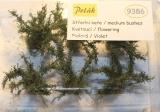 9386 mittel hohe Büsche, blühend, Violet