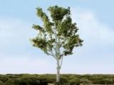 96076 HO Paper Birch, Birke
