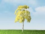 94476 Basswood Tree, Linde