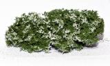 701-915 blühende Büsche, Flowering Shrubs, weiß