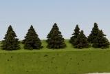SM015 Spruce / Fichte 15 mm