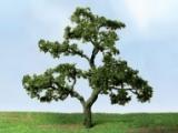 92222 N Beech Tree, Buche (3)