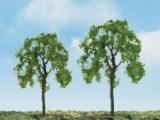 94423 N Ash Tree, Esche (4)