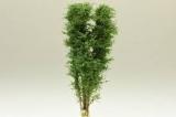 9522 Multi-Stamm Baum -12  bis zu 13 cm - Birkengrün