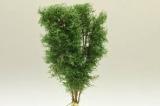 9524 Multi Stamm Baum 12-13cm buchengrün