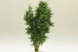 9525 Multistamm Baum 12-13 cm Eichengrün