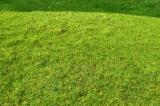 F001 Cut Meadow - Spring colour.
